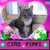 Lloran la muerte de Pippi, la gata alcaldesa
