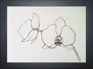 Flower Drawing - Phalaenopsis