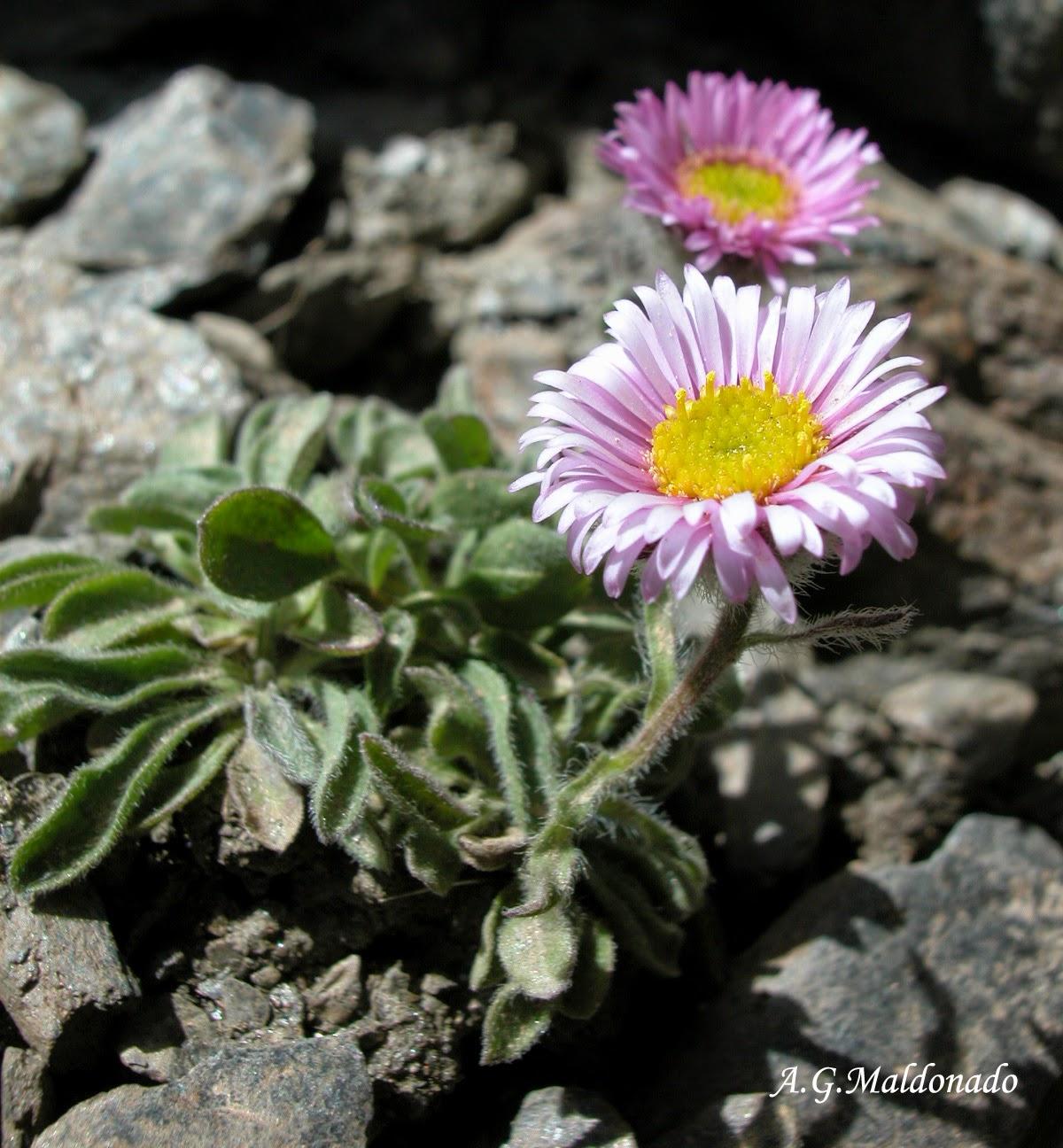 Biodiversidad Costa Granadina y ... (Plantas y Hongos)