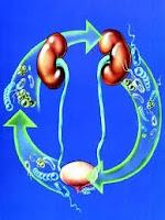 Pengobatan infeksi saluran kemih