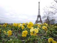 Fond d'écran février 2012 - la tour Eiffel vue depuis les jardins du Trocadéro (photo janv. 2012)