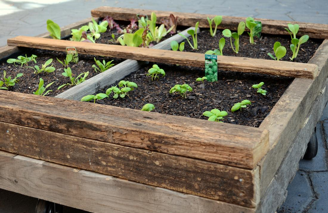 A pallet garden on wheels for Gardening using pallets