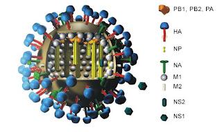 virus H7N9