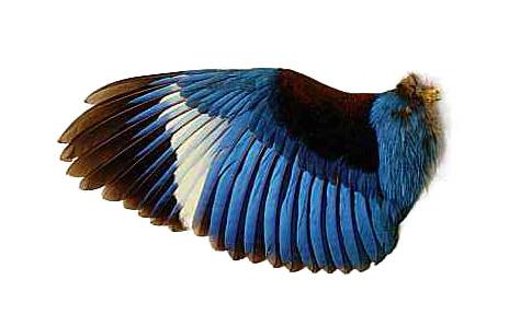 Real Bird Wings Folded