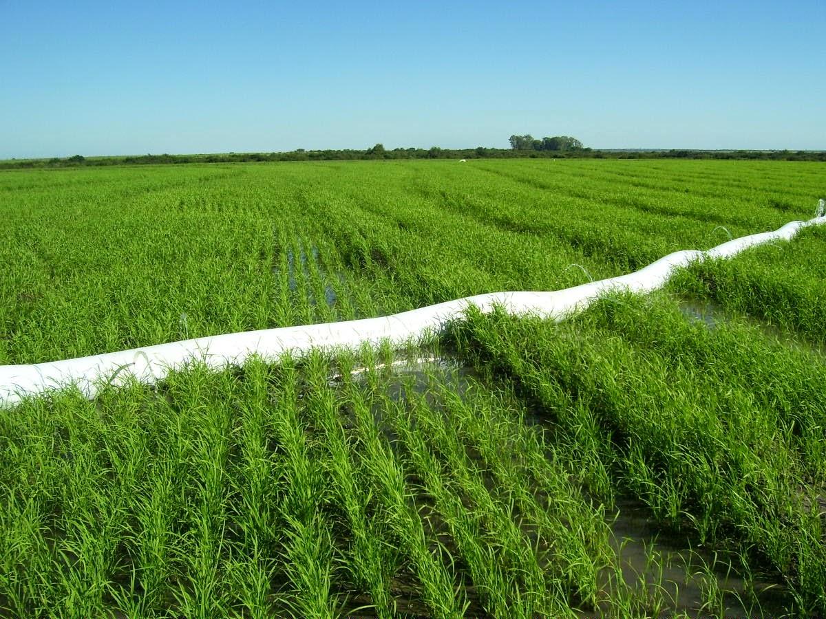 El arroz en fotos sistemas de riego for Sistema de riego