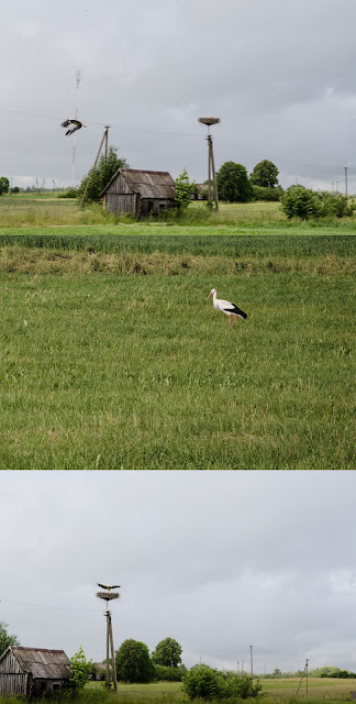 Lithuanian stork