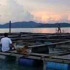 Pangkor Aquaculture fishfarm & Pangkor Guesthouse