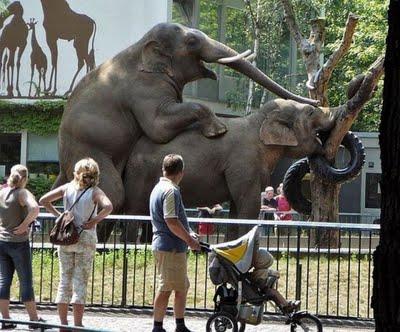 zoo k