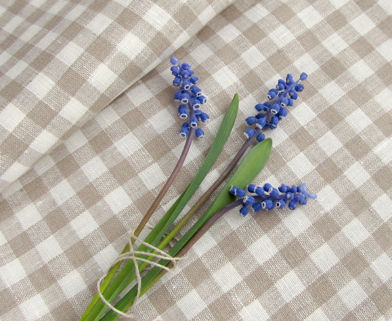 Мускари, Muscari, цветы