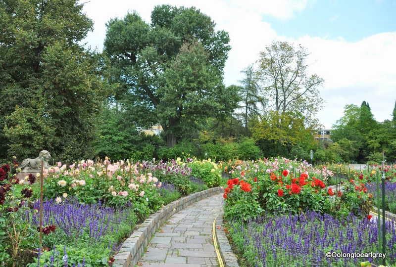 Dahlia garden, Palmengarten Garden, Frankfurt Germany