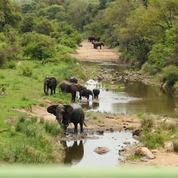 Krugerpark-avonturen - We zien 10-tallen roodbekbufferwevers bezig met het bouwen van nesten. Krugeravonturen - kamp Satara - Merloth park een bloemrijk park naast het Krugerpark.