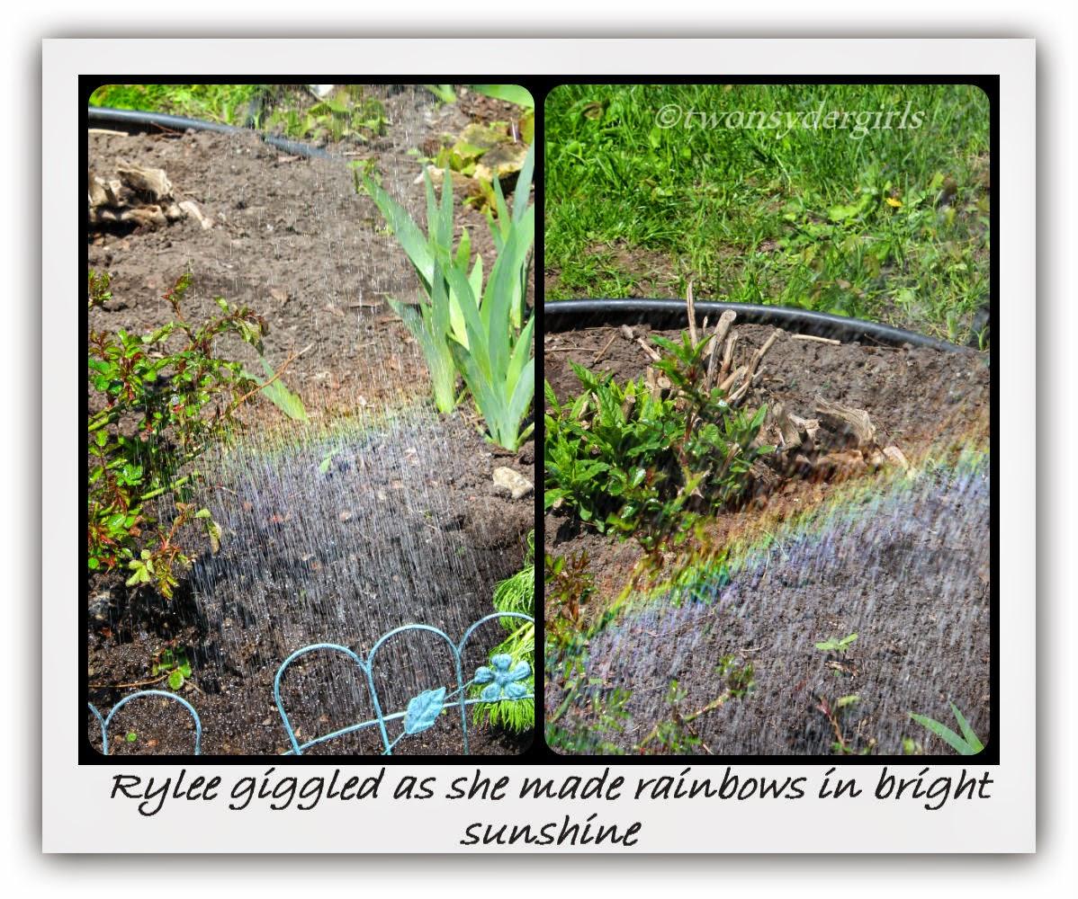 Sunshine rainbows from a garden hose