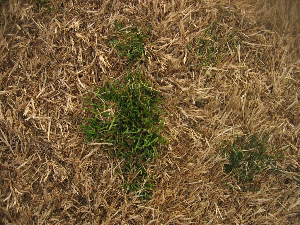 Xtremehorticulture Of The Desert Bermudagrass Lawn