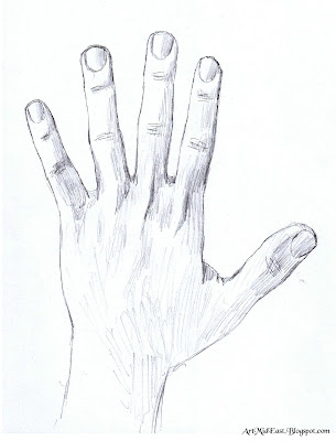 Draw hand anatomy proportions