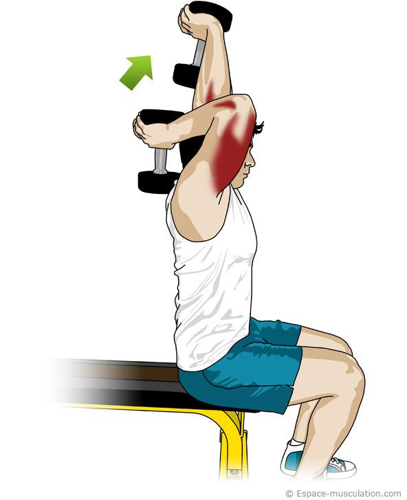 Musculation et fitness programme de musculation interm diaire - Programme prise de force developpe couche ...