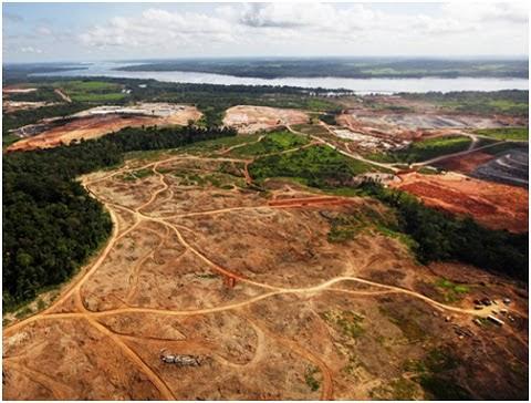 Segundo a pesquisa, a captação de dióxido de carbono pode ter caído à metade, em relação aos 2 bilhões de toneladas do composto que a floresta absorvia anualmente na década de 1990.  Para os autores, o aumento da mortalidade de árvores é considerada a principal causa da queda observada na capacidade da floresta para absorção de carbono.