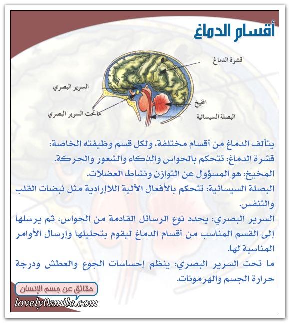 انفوجرافيك - صفحة 9 Hu-08-05