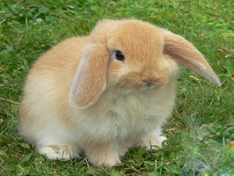 Animali nani - Lettiera coniglio nano ...
