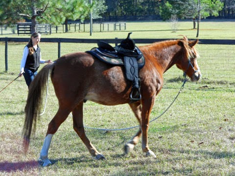 Dealing with equine metabolic syndrome