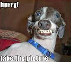 Dog comedy face - hurry take the picture
