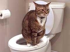Mèo đi vệ sinh, sau khi được huấn luyện.