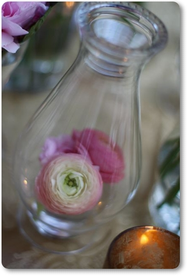 rosa ranunkler, bordsdekoration rosa ranunkel