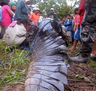 Lolong, buaya air masin, buaya paling besar di dunia, berita, filipina,