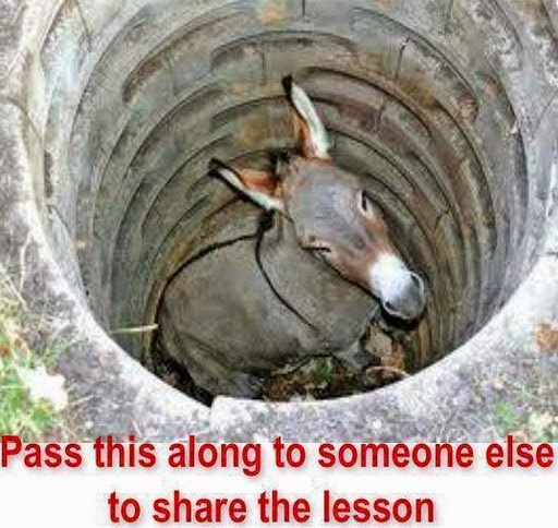 Lesson From Donkey Fell Down Into a Well