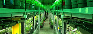 http://www.spiegel.de/international/business/pot-becomes-big-business-as-states-legalize-cannabis-a-977628.html
