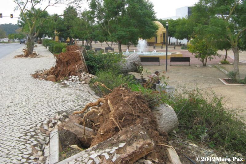 Silves, depois do tornado
