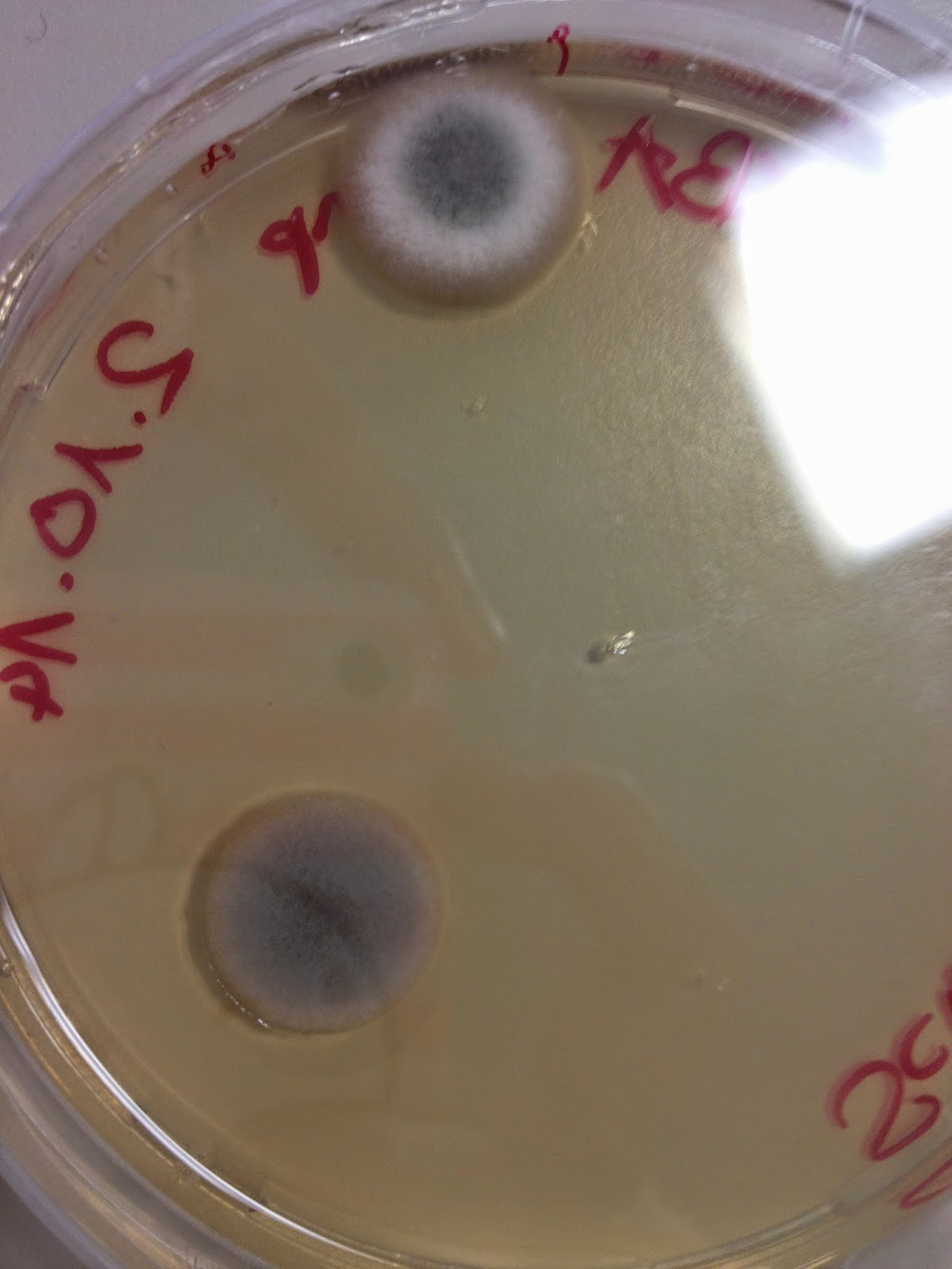 hydroxyzine atarax dose effects