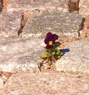 Växtlistor för lite besvärligare odlingslägen.