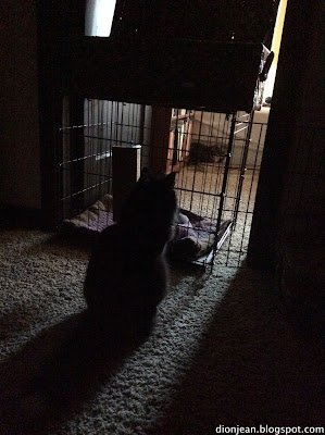 Shy cat and bold cat separated by a gate