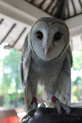 jual anakan barn owl, makanan anakan barn owl, harga anakan barn owl, cara merawat anakan barn owl, merawat anakan barn owl, cara memelihara anakan barn owl, jual anakan barn owl murah, baby barn owl noise, makanan anakan barn owl, baby barn owl not eating, jual anakan barn owl surabaya, baby barn owl pictures, cara merawat anakan barn owl, baby barn owl photos, cara memelihara anakan barn owl, baby barn owl pellets, anakan barn owl, baby barn owl pics, jual anakan barn owl, baby barn owl pet, harga anakan barn owl, baby barn owl rescue, merawat anakan barn owl, baby barn owl sounds, jual anakan barn owl murah, baby barn owl screech, makanan anakan barn owl, baby barn owl for sale, jual anakan barn owl surabaya, baby barn owl for sale uk, cara merawat anakan barn owl, baby barn owl care sheet, cara memelihara anakan barn owl, jual anakan barn owl surabaya, baby barn owl bandung, jual baby barn owl surabaya, jual baby barn owl bandung, baby barn owl video, jual baby barn owl burung hantu jogja, baby barn owl weight, baby barn owl care, baby barn owls wikipedia, baby barn owl call, baby barn owl youtube, baby barn owl cam, baby barn owl for sale, cara merawat anakan barn owl, baby barn owl for sale uk, cara memelihara anakan barn owl, buffy fish owl jantan, baby barn owl diet, harga buffy fish owl juve, baby barn owl dancing, jual buffy fish owl, baby barn owl eating, jual buffy fish owl jakarta, baby barn owl not eating, jual buffy fish owl chick, baby barn owl for sale, jual buffy fish owl brancher, baby barn owl facts, jual buffy fish owl banten, baby barn owl food, jual buffy fish owl anakan, baby barn owl feeding, jual buffy fish owl di jakarta, baby barn owl for sale uk, jual baby buffy fish owl, baby barn owls for sale in devon, buffy fish owl kaskus, baby barn owls for sale west midlands, karakter buffy fish owl, baby barn owls for sale essex, keistimewaan buffy fish owl, baby barn owls for sale in stoke on trent, kebiasaan buffy fish owl, baby barn owls for sale in kent, buffy fish owl lifespan, baby barn owl gif, buffy fish owl male, baby barn owl hissing, buffy fish owl murah, baby barn owl hatching, makanan buffy fish owl, harga anakan barn owl, melatih buffy fish owl, jual anakan barn owl, cara memelihara buffy fish owl, jual anakan barn owl murah, jual buffy fish owl murah, jual anakan barn owl surabaya, merawat buffy fish owl, do baby barn owls look like, makanan untuk buffy fish owl, baby barn owls marriott, cara menjinakkan buffy fish owl, jual anakan barn owl murah, makanan burung hantu buffy fish owl, merawat anakan barn owl, buffy fish owl 550rb pre order,