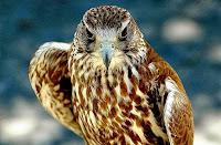HD desktop wallpaper falcons collection (4)