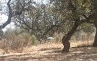 Encinas de Extremadura