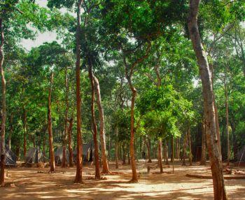 Beautiful Trees - Maredumilli