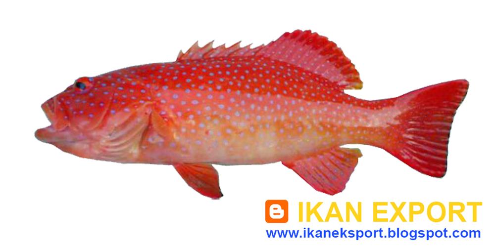 Ikan Eksport Juli 2015