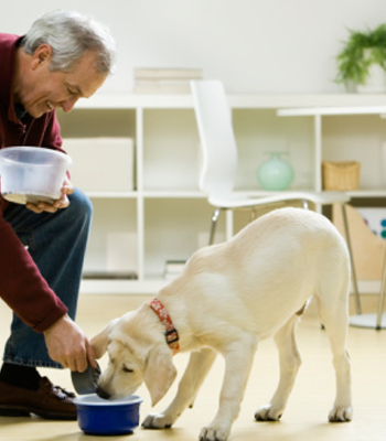 Can Traveling Cause Diarrhea In Dogs