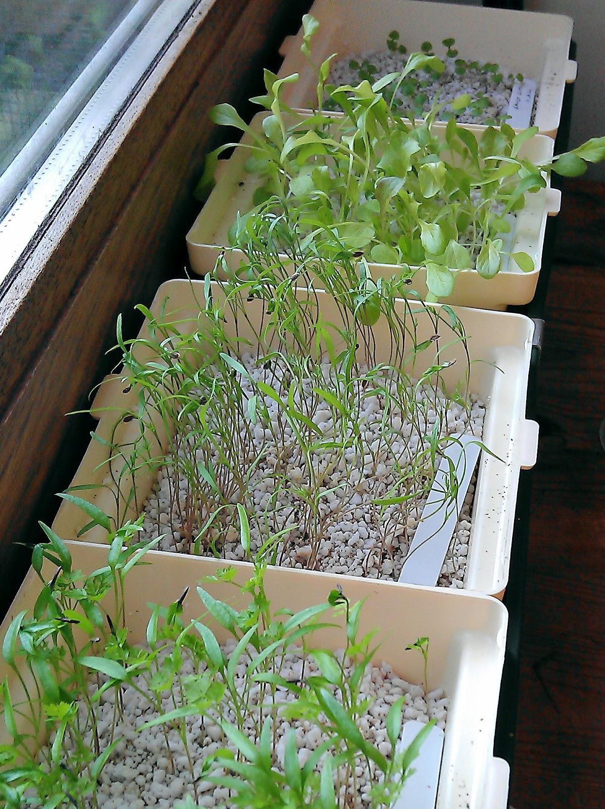Hydroponics Herb Garden Kitchen Secret Garden Club July 2012