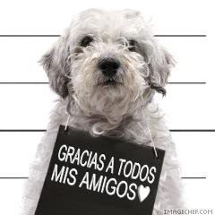 imágenes de gracias  en perrito