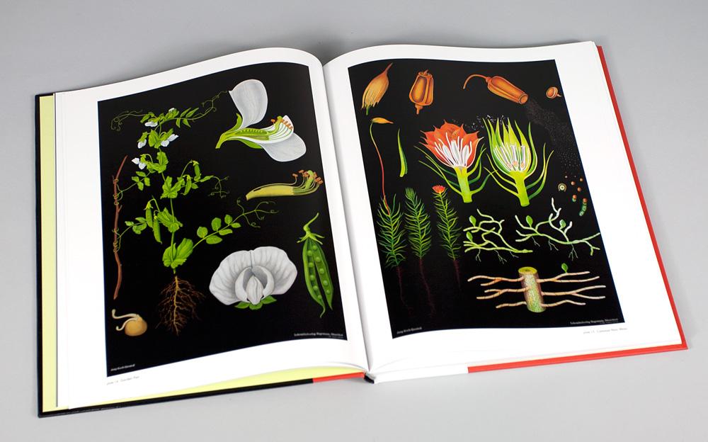 Green Bicycle Black Botanical Prints