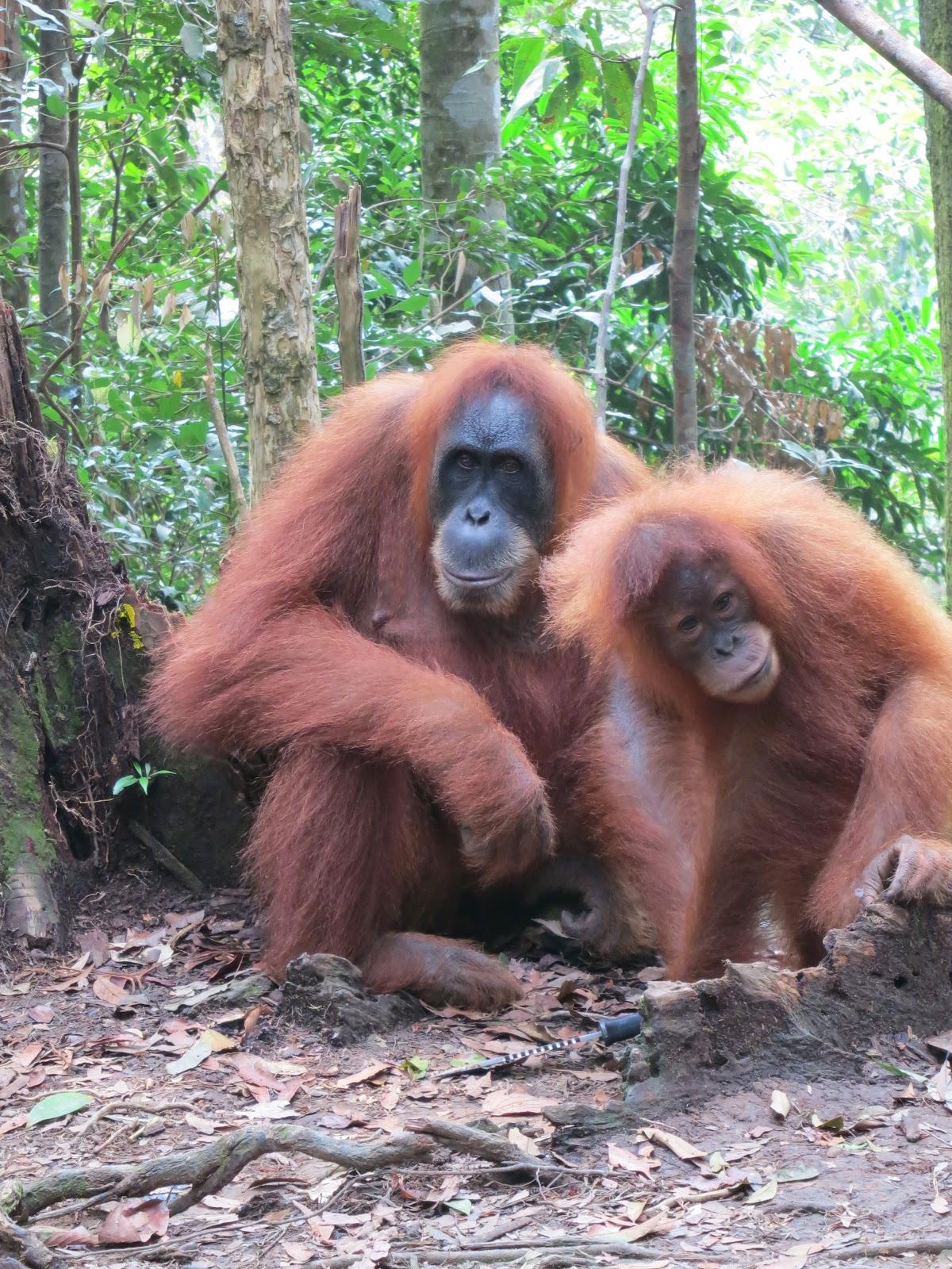 imagenes de animales haciendo el amor - Mujeres Haciendo El Amor Con Perros Web WebCrawler