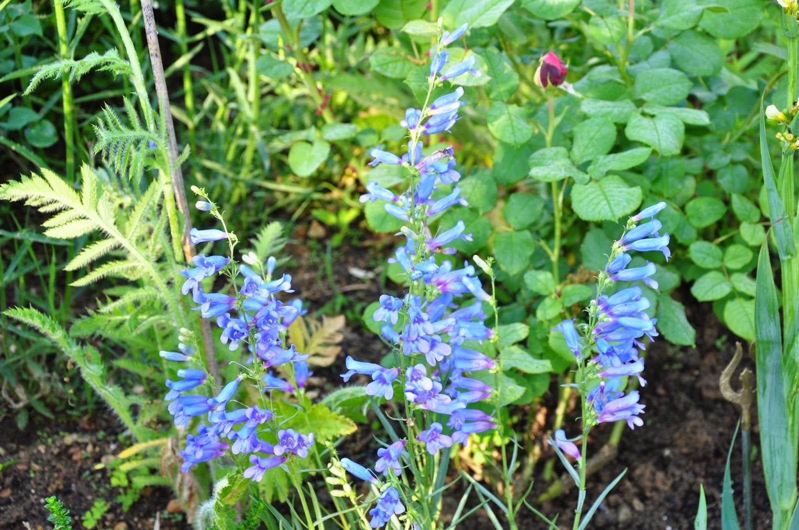 Le jardin du bois joli foire aux plantes saint antoine for Place du jardin aux fleurs