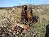 """""""NIKA Y RUTH"""" (mis perros de caza que han sido regalados este mes de Enero de 2012)"""