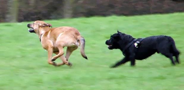 สุนัขวิ่งไล่จักรยาน