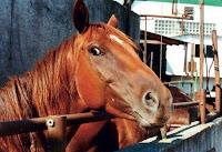 Crise faz Obama 'servir' carne de cavalo