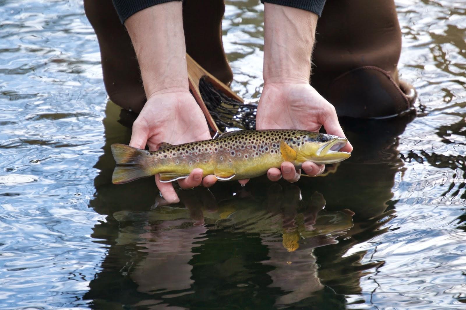 Minnesota driftless fly fishing trip report minnesota for Trout fishing mn season