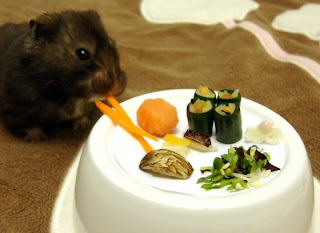 foto hamster comida