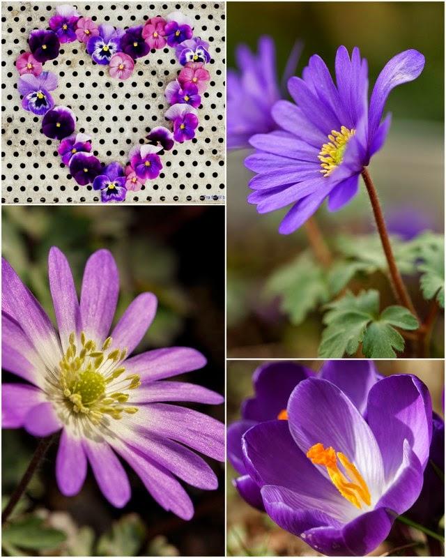 Haveåret 2014 i billeder